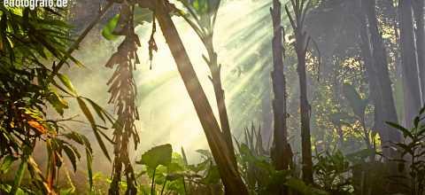 Regenwald auf Bali