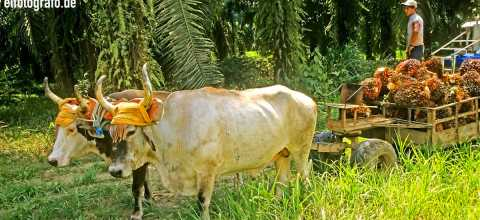 Landwirtschaft in Costa Rica
