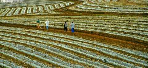 Landwirtschaft auf Hawaii