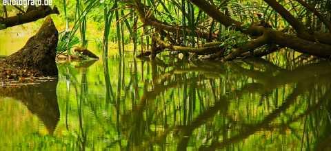 Fluss in Indien