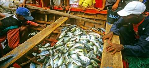 Fischmarkt auf den Kapverden
