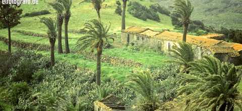Palmen im Sturm auf La Gomera
