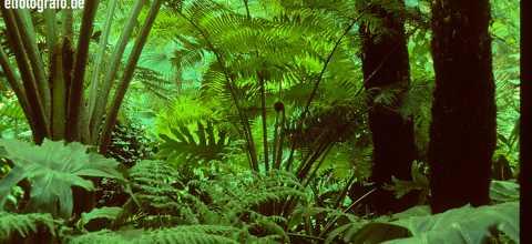 Regenwald auf La Gomera