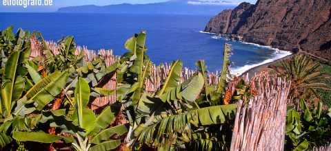 Bananen auf La Gomera