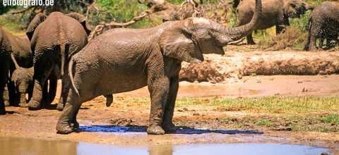 Elefanten in Lesotho