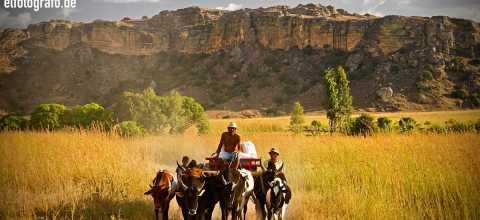 Viehkutsche auf Madagaskar