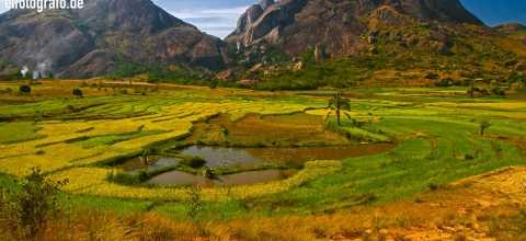 Reisfelder auf Madagaskar