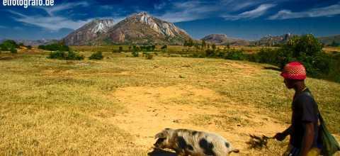 Mann mit Schwein auf Madagaskar