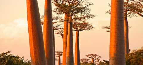 Wasserträgerin auf Madagaskar