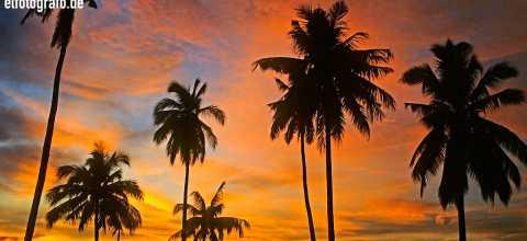Palmen in Malaysia
