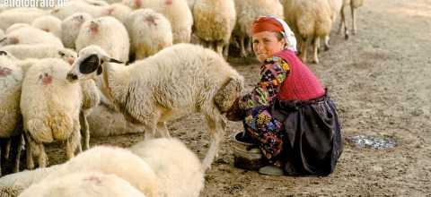 Schafhirtin in Marokko